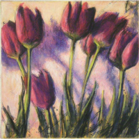 wever-peter-tulpen